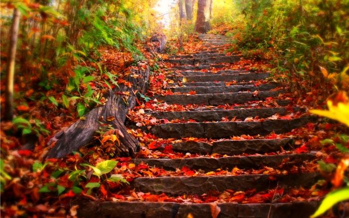 autumn-free-wallpaper-autumn-leaves_2560x1600_93069
